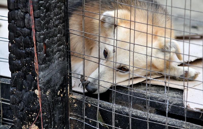 Приют для бездомных животных альма